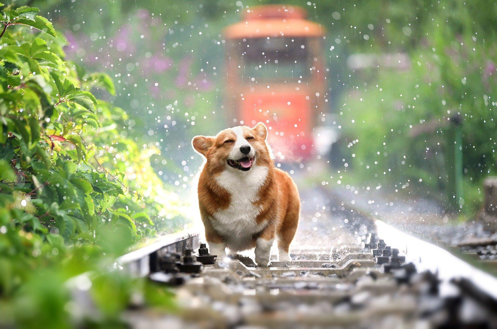 Tracker Hundeortung
