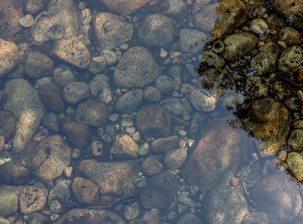 Molch im Teich