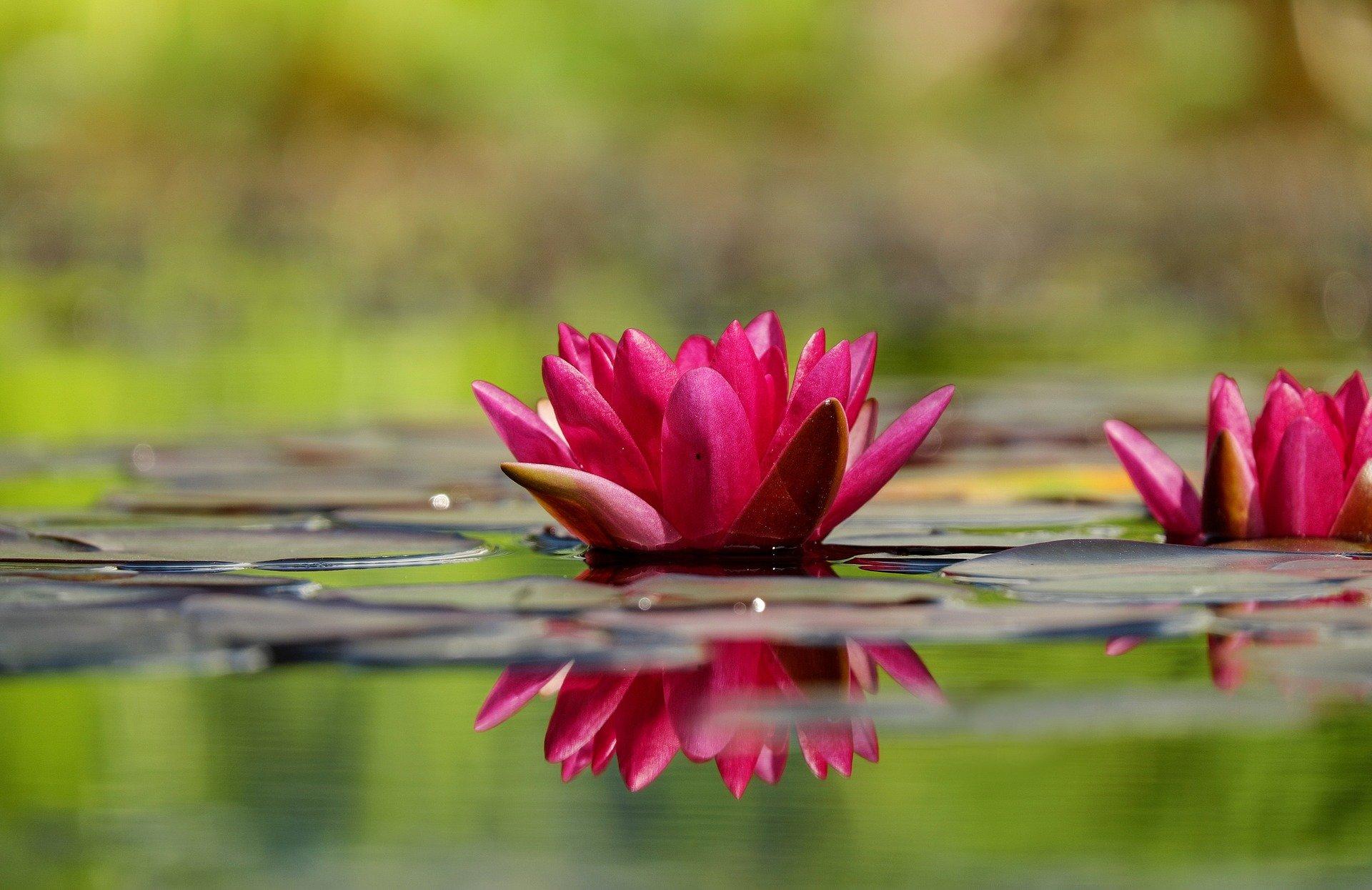 Wasserpflanzen Teich