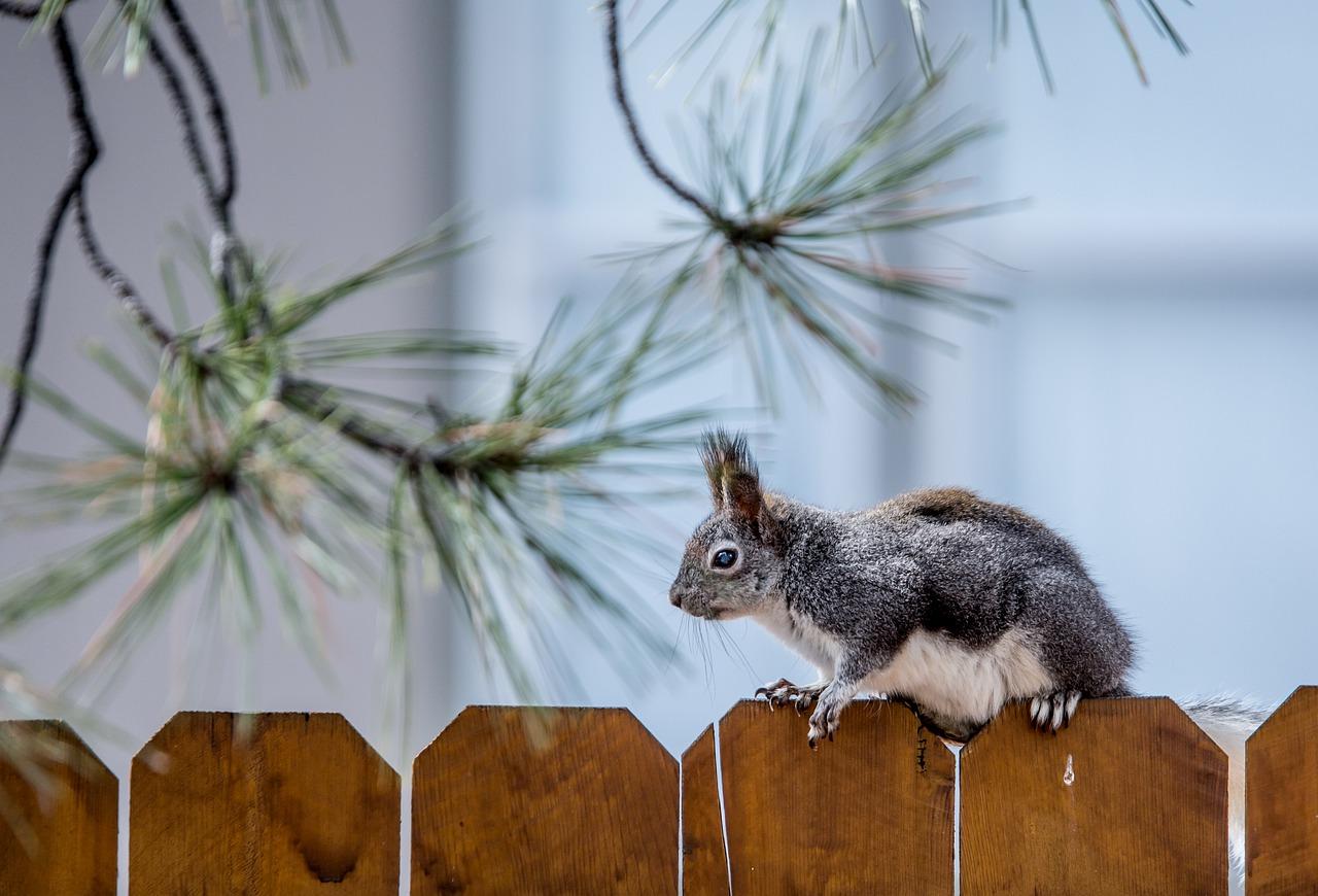 eichhörnchen kot im garten